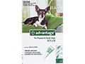 Advantage Small Dog & Puppy - Up to 4kg (Green) - 4 pack
